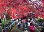 大山寺の階段下からの紅葉