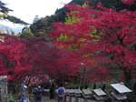 大山寺階段上からの紅葉