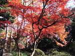 六義園内の紅葉3.JPG