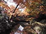 六義園内蛛道山陰橋からの紅葉1.JPG
