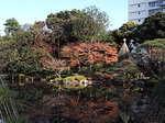 旧古河庭園の紅葉1.JPG