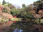 旧古河庭園の紅葉2.JPG