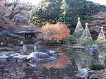 旧古河庭園内の日本庭園1.JPG