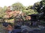 旧古河庭園内の日本庭園2.JPG