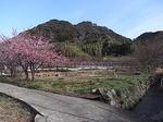 河津桜祭り来宮神社付近の里山風景.JPG