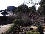 鳩森八幡神社富士塚頂上から見た境内.JPG