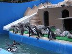 犬吠埼マリンパーク ペンギン