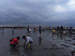 ふなばし三番瀬海浜公園潮干狩り会場1.JPG