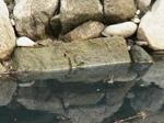 中津城石垣の刻印.JPG