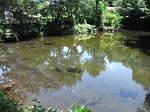 忍野八海出口池の水面.JPG