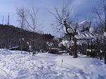 旭山動物園園内(雪景色)2.JPG