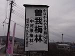 曽我梅林中河原会場入口2012-1.JPG