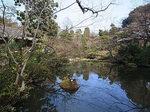 根津美術館日本庭園4.JPG