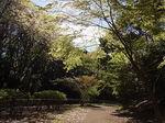 桜祭り尾根緑道2013入口付近.JPG