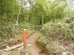 鳩待峠から尾瀬ヶ原への山道1.JPG